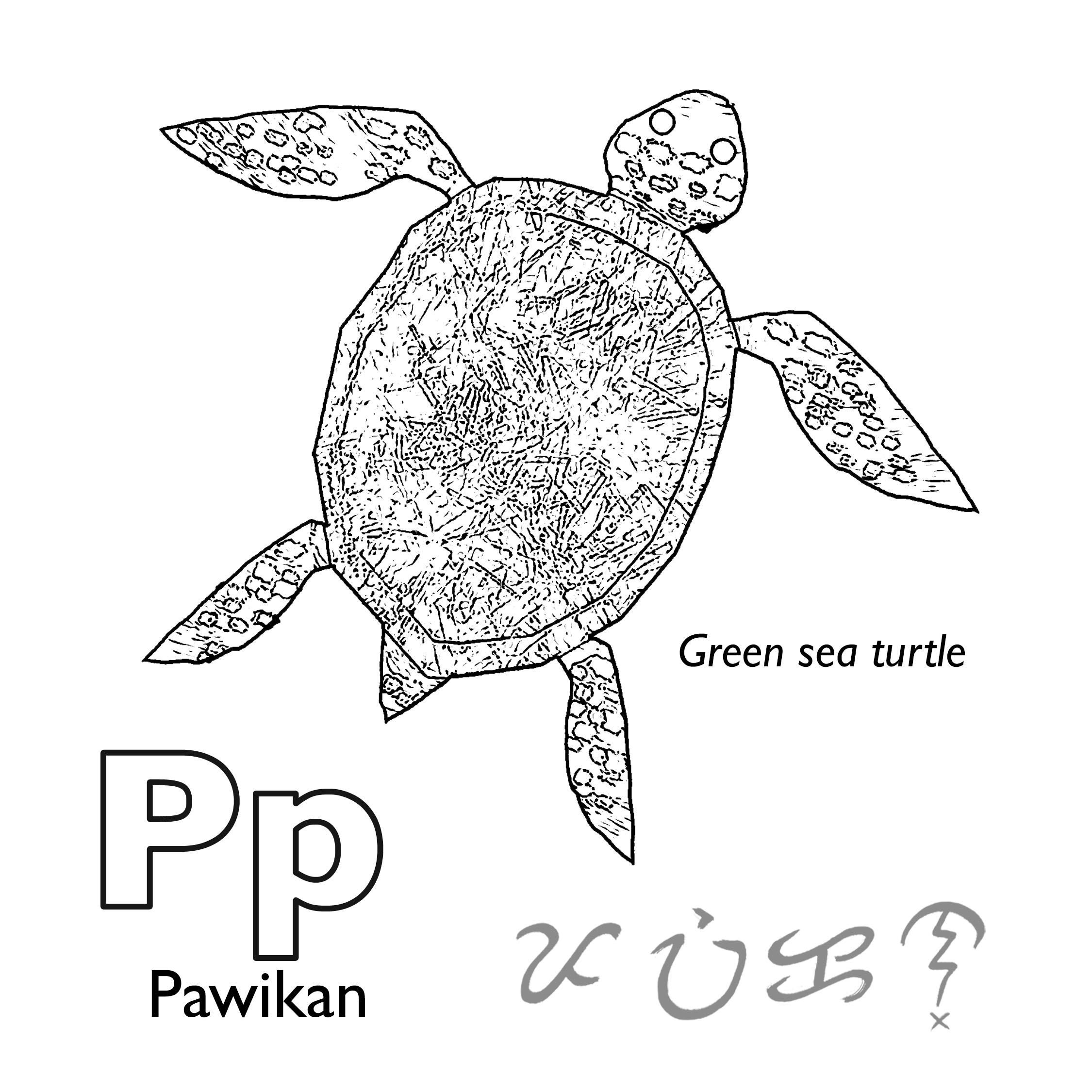 Pawikan